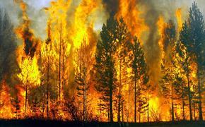 Лесные пожары можно было предотвратить