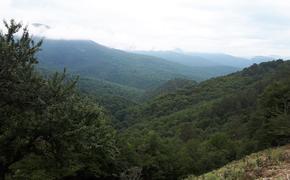 Крымский природный заповедник: почему он удивителен…