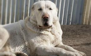 Водители и подмосковные зоозащитники спасли собаку, которую тащили по шоссе, привязав к авто