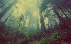 Пятилетнюю девочку ищут в лесу в Нижегородской области