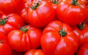 Жителей Петербурга возмутила битва помидорами в городе