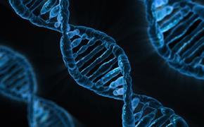 Ученые взяли образцы ДНК из озера Лох-Несс для доказательства существования легендарного монстра