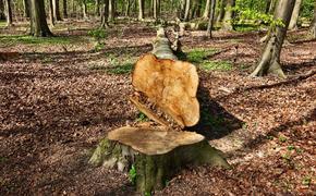 Охотник нашел в лесу под Пермью двух пенсионеров, которых искали пять дней