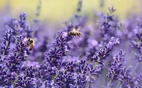 В Бразилии погибли 500 миллионов пчел