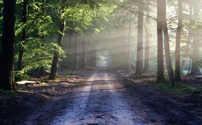 Мама спасённой в лесу девочки рассказала о днях дочери в лесу