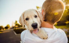 Ученые выяснили, что владельцы собак реже страдают ожирением