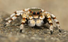 Британцы страдают от обилия пауков