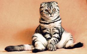 В Кемерово кот заперся в квартире и не давал хозяевам войти