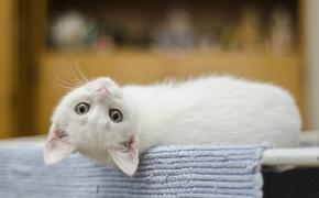 Рижская дума построит «кошачий городок»