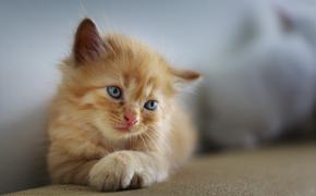 Житель Китая за 35 тысяч долларов клонировал своего любимого кота