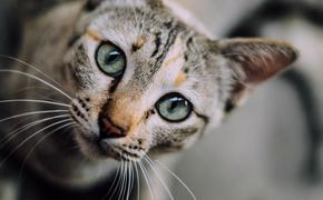 Двое домашних котов спасли итальянскую семью от гибели во время оползня
