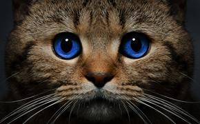 «Кошачий СПИД». Им болеют и бездомные животные и домашние любимцы, но опасен ли он для человека?