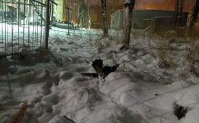 В Карелии в соцсетях пишут о желтом снеге и гибели птиц в городе Сегеже