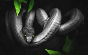 Вьетнам: дети использовали мертвую змею в качестве скакалки