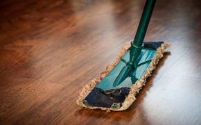 Подмосковные специалисты рассказали, что домашняя пыль может вызывать гибель питомцев
