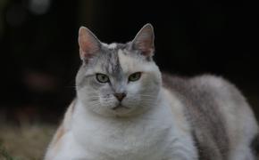 За толстых котов в самолёте россияне теперь будут доплачивать