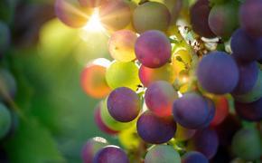 """""""Настоящая революция"""": Киселев восхищен законопроектом о виноделии России"""