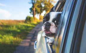 Жительница Одинцово в миг лишилась машины и собаки