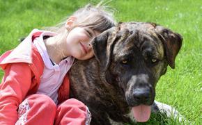 Биологи назвали точную формулу расчета собачьего возраста по отношению к человеческому