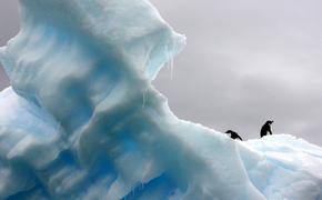 У полярников в Антарктиде после 14 месяцев уменьшился мозг