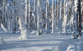 Синоптики прокомментировали информацию о 40-градусном морозе в Москве на Новый год