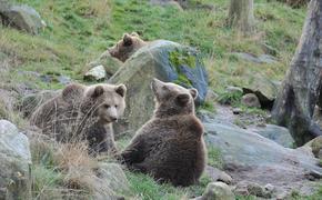 В Японии поймали семейство медведей, которые решили перезимовать в поликлинике