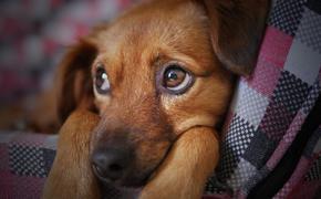 Кинологи рассказали, как помочь собакам справиться со стрессом во время новогодних праздников
