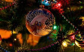Полиция начала проверку по факту кражи елки из детсада на Урале