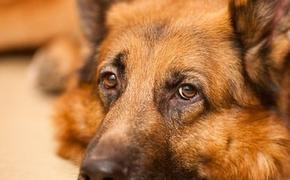 На женщину в Перми напали собаки