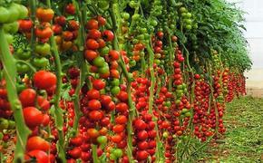 Овощи кричат от боли и жажды. Вегетарианцы в шоке