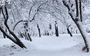 Синоптики не знают, когда в столичном регионе выпадет снег