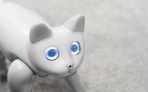 Китайская компания показала на выставке кота-робота, поддающегося дрессировке