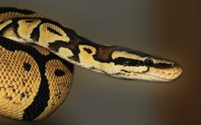 Жительница Таиланда встретилась в туалете со змеей и вступила с ней в схватку