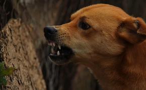 В Марий Эл умер покусанный собаками мужчина