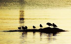 Аномальная жара погубила порядка миллиона морских птиц в Тихом океане
