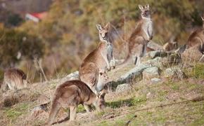 Долина Кенгуру в Австралии призывает туристов вернуться