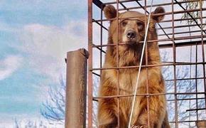В Адыгее опровергли информацию о нападении медведя на ребенка в одном из туркомплексов