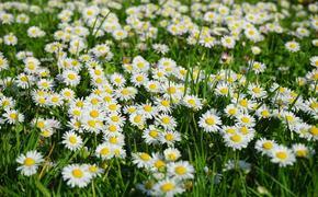 Лекарственные травы, использование которых может навредить здоровью
