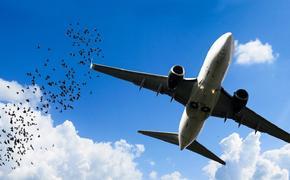В аэропорту Сочи птиц будут отпугивать специальными криками бедствия