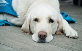 Зеленский пообещал эвакуировать оставшуюся в Ухани украинку и ее собаку