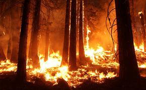 В Хабаровском крае утром, 30 марта, зарегистрировано пять природных пожаров