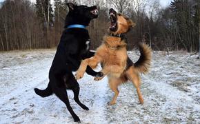 В Сети требуют привлечь Гуфа к ответственности после прогулки с собакой в прямом эфире