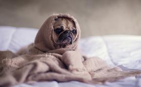 Кинолог объяснил, чем занять  собаку в период самоизоляции