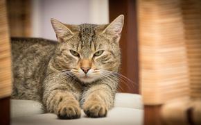 Домашний кот заразился коронавирусом в Гонконге