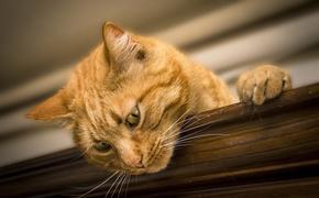 ВОЗ о кошках в Ухане: сведений о передаче инфекции от животных к человеку пока нет