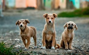 В Cовфеде осудили полицейских, которые задержали гуляющего с собакой москвича