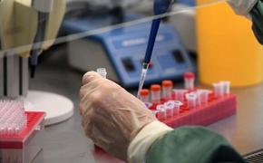 В России испытания вакцины от коронавируса на животных завершат к концу апреля