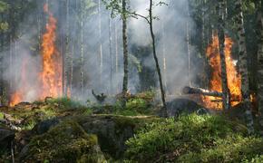 Около Чернобыльской АЭС  начался второй лесной пожар
