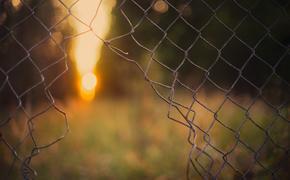 В США начали массово выпускать на свободу заключенных