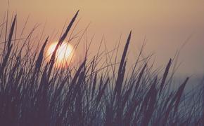 Из-за пандемии COVID-19 температура на юге РФ вернулась к климатической норме